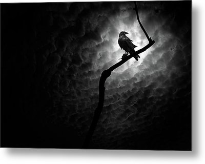 Raven, Death Valley Metal Print