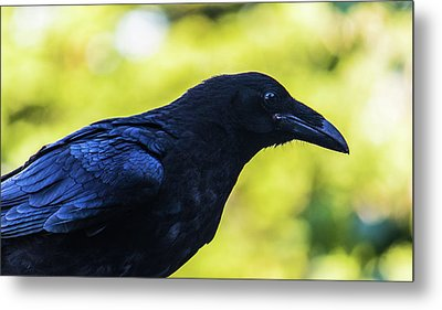 Metal Print featuring the photograph Raven by Jonny D