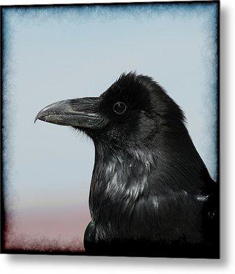 Raven Profile Metal Print by Ernie Echols