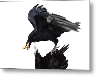 Metal Print featuring the photograph Ravens by Jane Melgaard