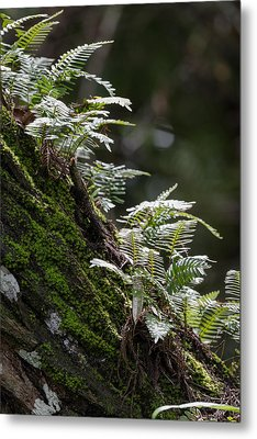 Reach For The Light Metal Print by Christopher L Thomley