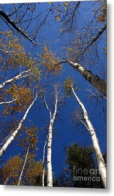 Reach For The Sky Metal Print by Steve Augustin