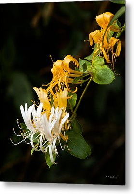 Reaching Metal Print by Christopher Holmes