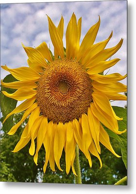 Reaching For The Sky Metal Print by Bruce Bley
