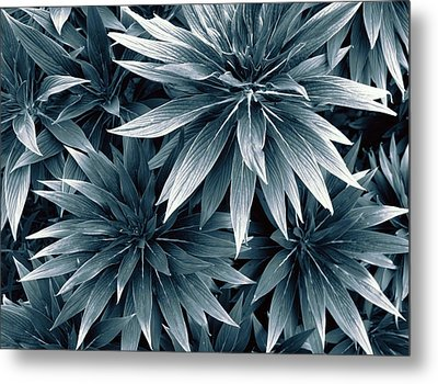 Metal Print featuring the photograph Reaching Out by Wayne Sherriff