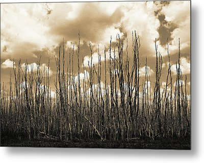 Reaching To The Sky Metal Print