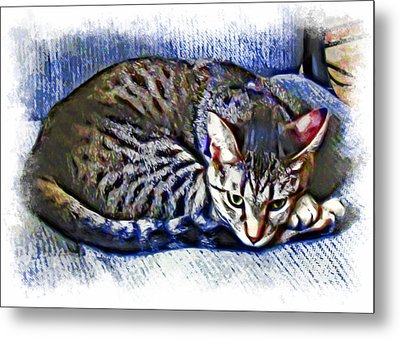 Ready For Napping Metal Print by David G Paul