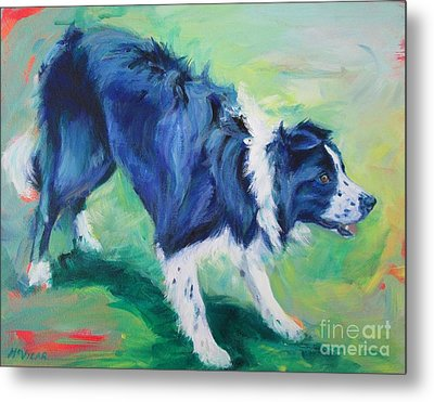 Ready To Fly - Border Collie Metal Print