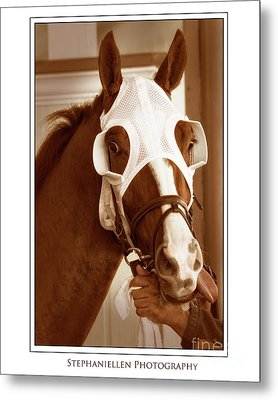 Ready To Race Metal Print by Stephanie Hayes