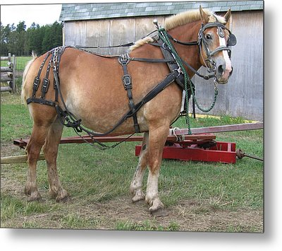 Ready To Work Metal Print by Laurie With