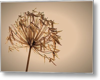 Metal Print featuring the photograph Reap What You Sow by Tim Nichols