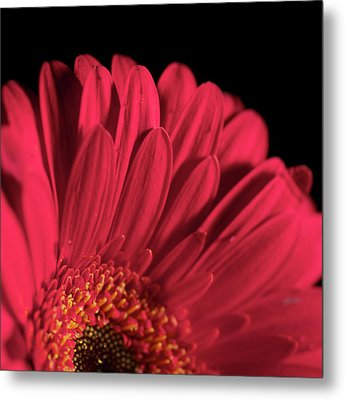 Metal Print featuring the photograph Red 4 by Sheryl Thomas