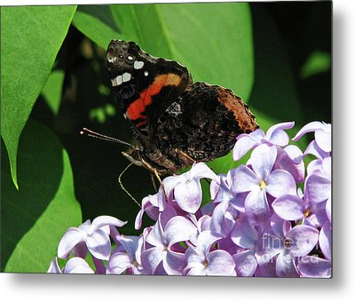 Metal Print featuring the photograph Red Admiral Butterfly by Deborah Johnson