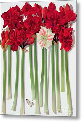 Red Amaryllis With Butterfly Metal Print by Lizzie Riches
