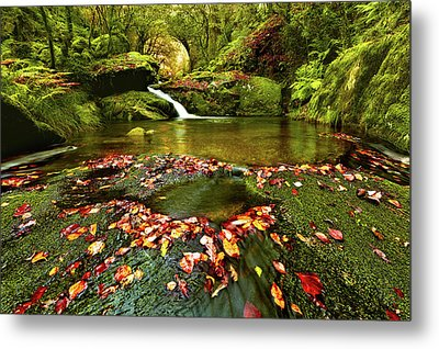 Metal Print featuring the photograph Red And Green by Jorge Maia