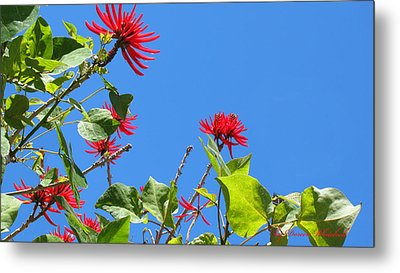 Red And Green San Diego Flowers Metal Print by Doreen Whitelock