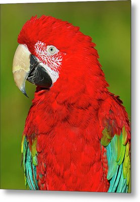 Metal Print featuring the photograph Red And Green by Tony Beck