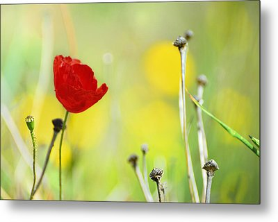 Red And Yellow Metal Print by Guido Montanes Castillo