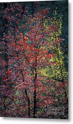 Red And Yellow Leaves Abstract Vertical Number 1 Metal Print by Heather Kirk
