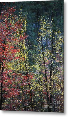 Red And Yellow Leaves Abstract Vertical Number 2 Metal Print by Heather Kirk