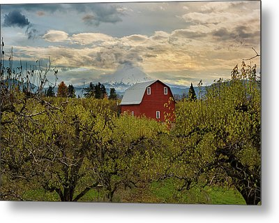 Red Barn At Pear Orchard Metal Print