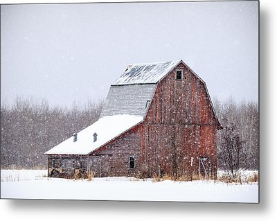 Red Beauty In Snow Metal Print