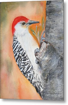 Red Bellied Male Woodpecker Metal Print