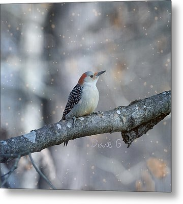 Red-bellied Woodpecker In Snow Metal Print by Diane Giurco