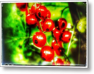 Metal Print featuring the photograph Red Berries by Isabella F Abbie Shores FRSA