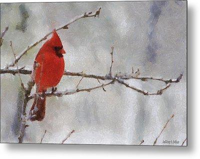Red Bird Of Winter Metal Print by Jeff Kolker