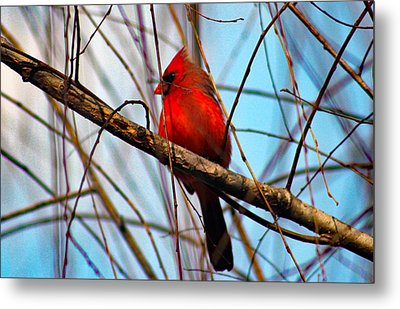 Red Bird Sitting Patiently Metal Print