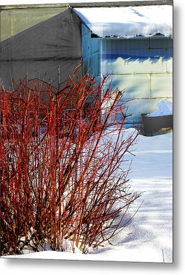 Red Branches And Snow Metal Print by Barbara  White