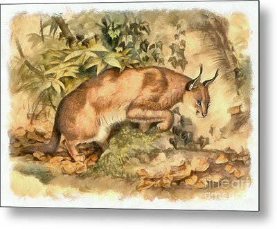 Red Caracal Metal Print