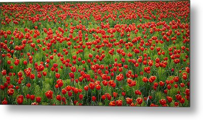 Metal Print featuring the photograph Red Carpet by Tom Vaughan