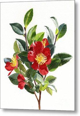 Red Christmas Camellias Metal Print by Sharon Freeman