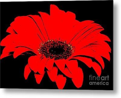Red Daisy On Black Background Metal Print by Marsha Heiken