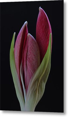 Metal Print featuring the photograph Red Divine by Juergen Roth