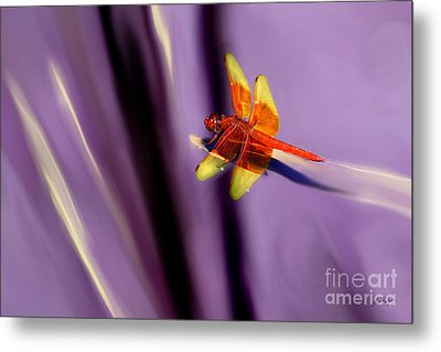 Red Dragonfly On Purple Background Metal Print
