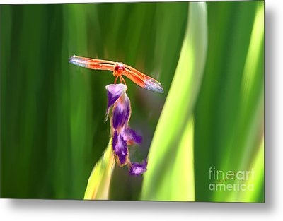 Red Dragonfly On Purple Flower Metal Print