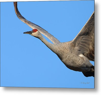 Metal Print featuring the photograph Red Eye Flight by Gerry Sibell