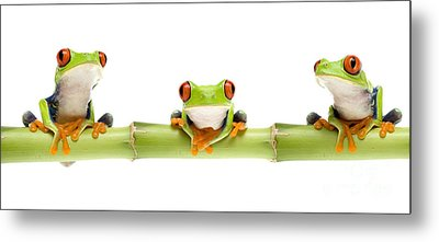 Red-eyed Treefrogs Metal Print by Mark Bowler and Photo Researchers