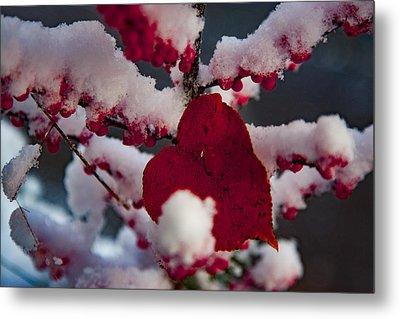 Red Fall Leaf On Snowy Red Berries Metal Print