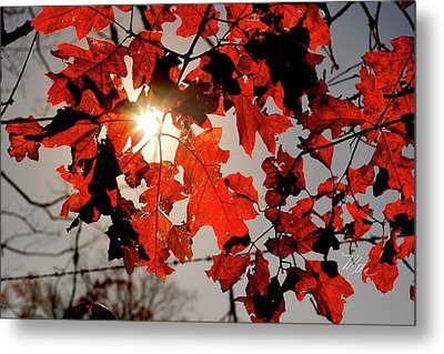 Red Fall Leaves Metal Print by Meta Gatschenberger