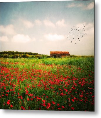 Metal Print featuring the photograph Red Field by Philippe Sainte-Laudy