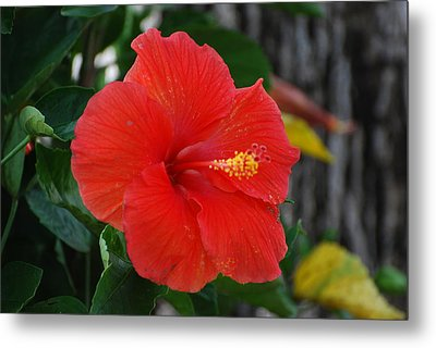 Red Flower Metal Print by Rob Hans