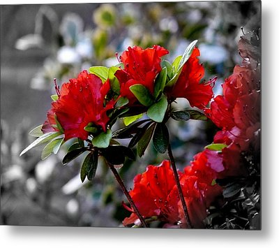 Red Flowers Metal Print by Aron Chervin