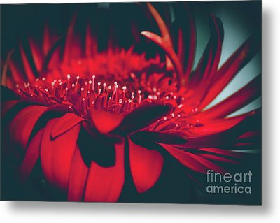 Metal Print featuring the photograph Red Flowers Parametric by Sharon Mau