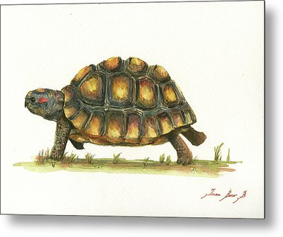 Red Footed Tortoise  Metal Print by Juan Bosco