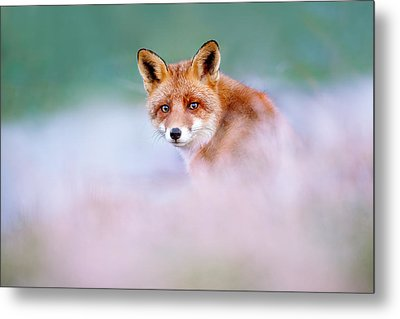 Red Fox In A Mysterious World Metal Print by Roeselien Raimond