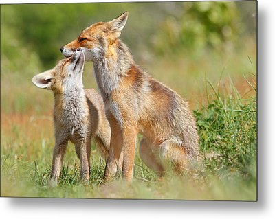 Red Fox Love Metal Print